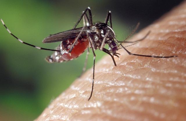 Muggenziften of mierenn*ken